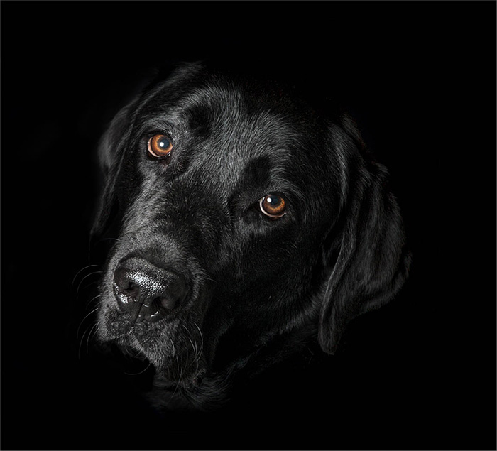 Labradorable by Lloyd Moore