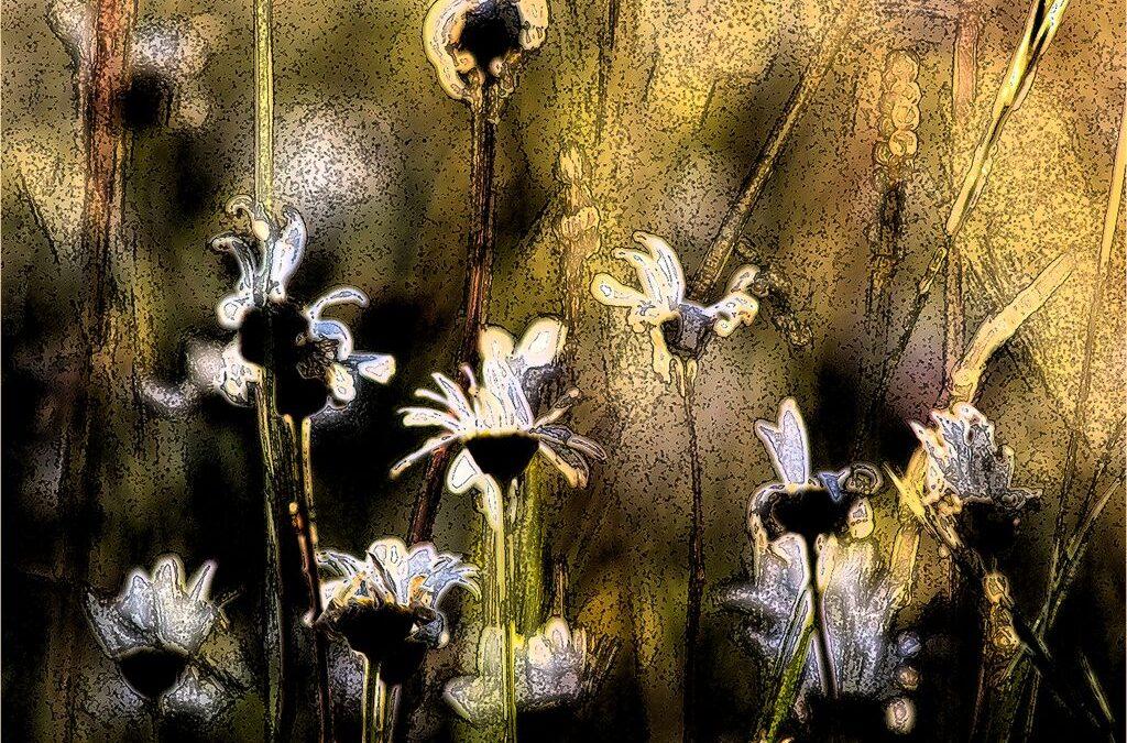 Advanced 1st_Midsummer Meadow_Elaine Rushton
