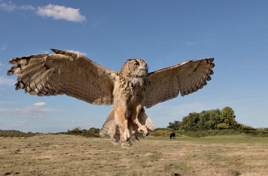 Advanced 2nd – Owl_Carrie Eva