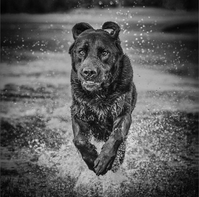 Advanced 2nd_Making a Splash_Lloyd Moore