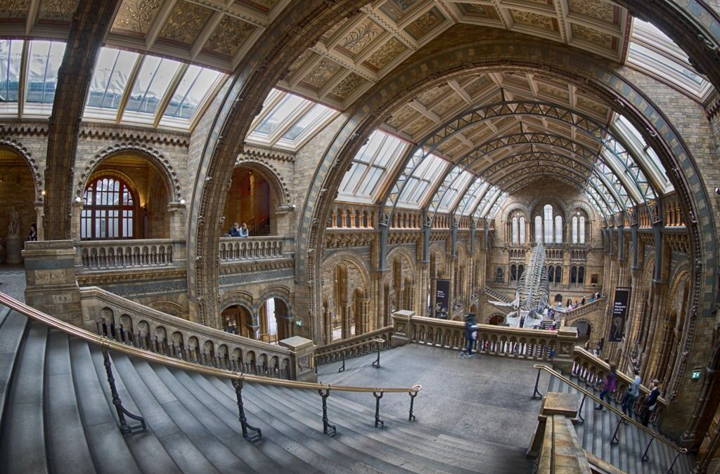 Advanced 3rd – Natural History Museum_Lloyd Moore CPAGB BPE2