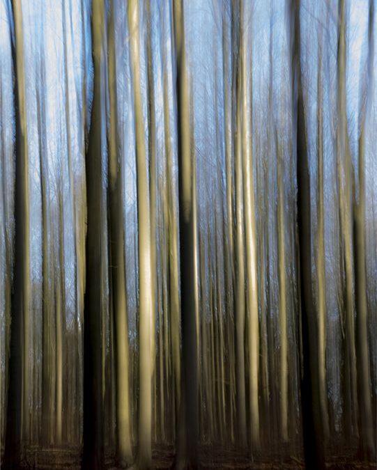 Ashridge abstract_Elaine Rushton