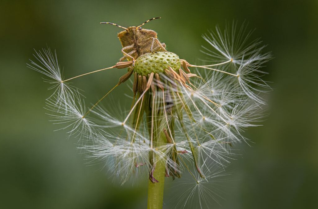 Best of the Best 2nd Place – Shield Bug King_Richard Wilson