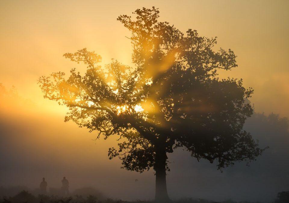 Bushy Park Sunrise_Martin Patten