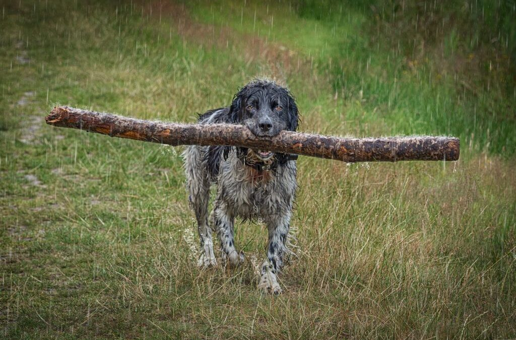 Set Subject – 1st Place – Soggy Doggy_Lloyd Moore