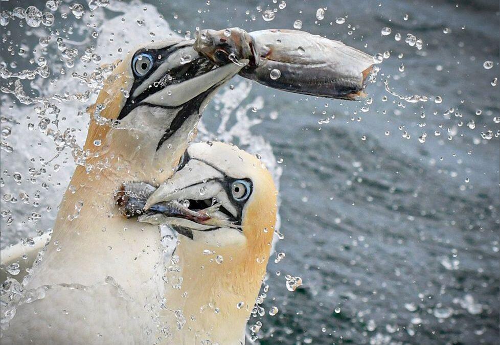 PDI 2nd – Fish Fight_Michelle Cirkel