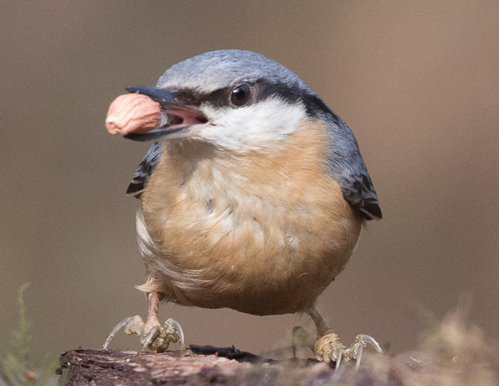 2nd - Nuthatch by Terri Adcock
