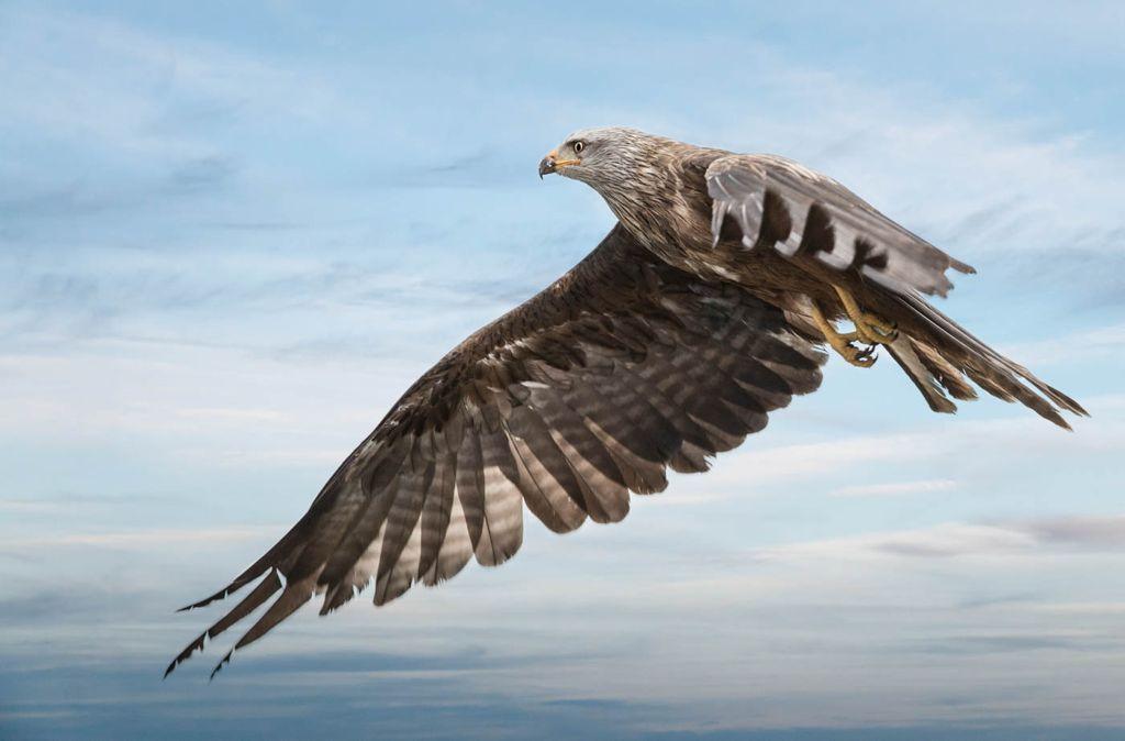 Advanced 3rd Flight of the Kite_Lloyd Moore