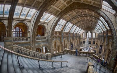 Advanced 3rd – Natural History Museum_Lloyd Moore CPAGB BPE2