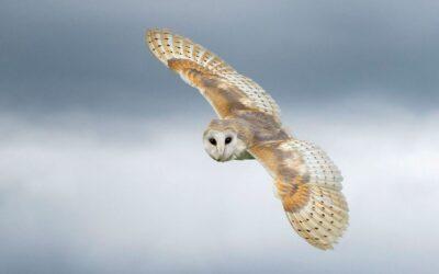 COMMENDED – On Silent Wings_Elaine Rushton