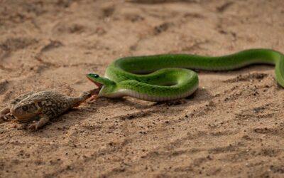 General 1st-Snakebite_Don Bennett