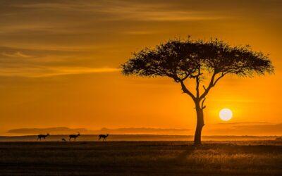 General 2nd – Gazelles at Sun Up_Don Bennett