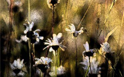 HIGHLY COMMENDED – Midsummer Meadow_Elaine Rushton