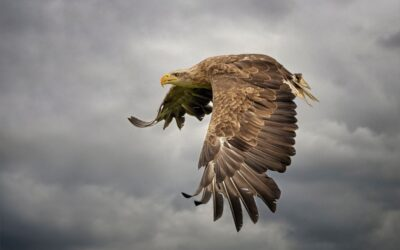 HIGHLY COMMENDED – Where Eagles Dare_Elaine Rushton
