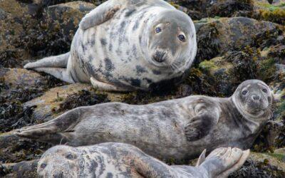 Intermediate 1st_Farne Island Grey Seals_Peter Xerri