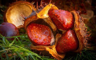 Intermediate 2nd – Autumn windfall_Steven Meekins
