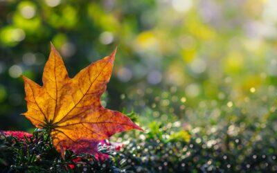 Primary 1st – Autumn Bokeh_Patrick Seehanach