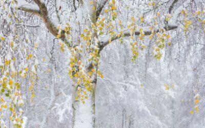 SECOND PLACE – Autum Meets Winter_Nigel Cox