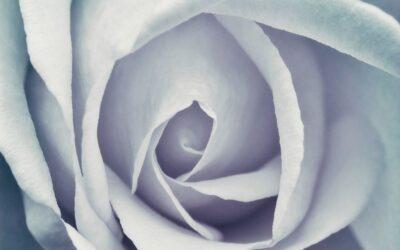 Set Subject 2nd – Rose Heart_Liz Ashford