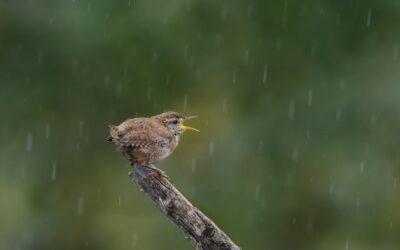 Set Subject 2nd – Singing in the Rain_Nigel Cox