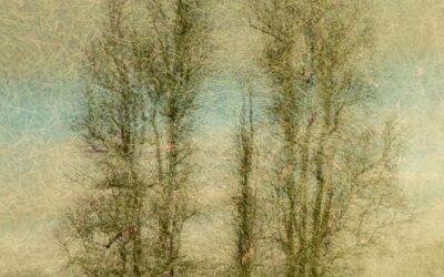 Set subject 1st_Tree texture_Steven Meekins CPAGB