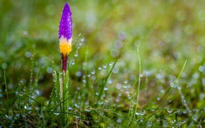 Set subject 2nd – Wet Spring_Patrick Seehanach