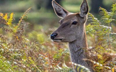 Intermediate 3rd – Doe a Deer_Steve Bond