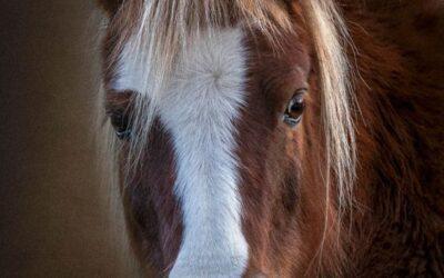 General 2nd – Grainy Horse Portrait_Sam Blood
