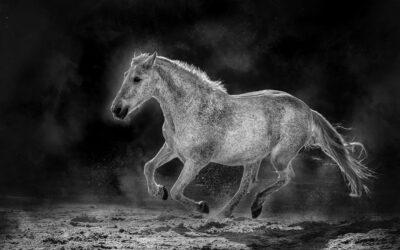 Advanced 3rd – Magic Stallion_Martin Patten