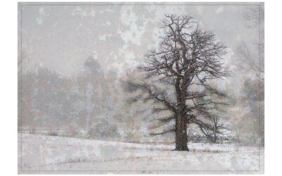 Set Subject 2nd – Winter Tree on Rusty Texture_Sam Blood
