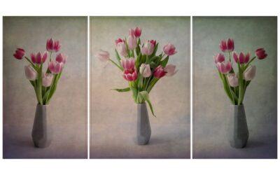3 Image Panel 1st – Tulips_Sam Blood