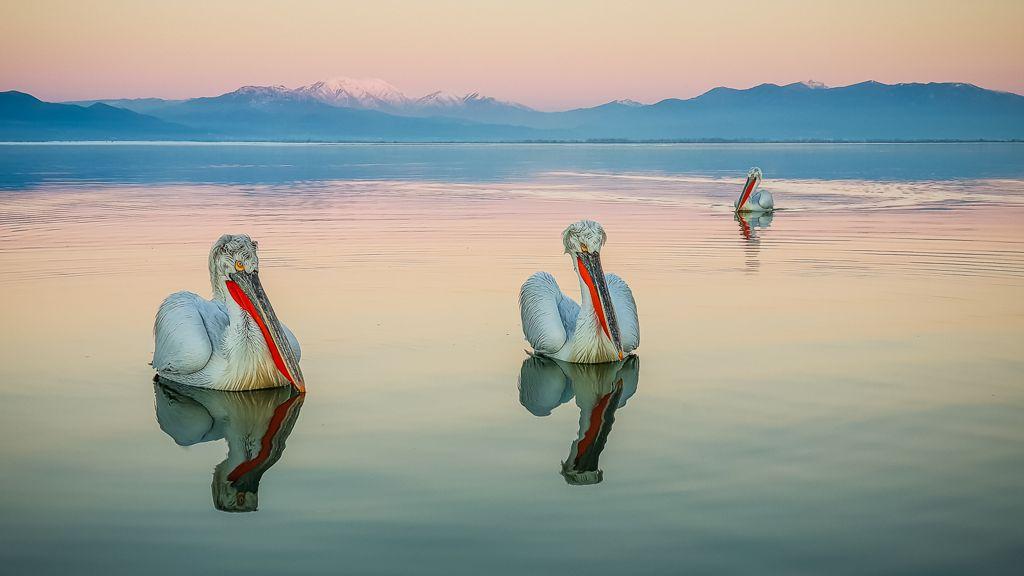 Advanced 3rd – Dalmatian Pelicans at Sunset_Martin Patten