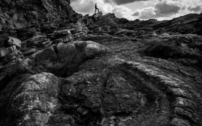 Print 3rd – Exploring Fossil Forest_Henry Frakes