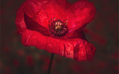 Set Subject 3rd – Poppy_Caroline Mockett