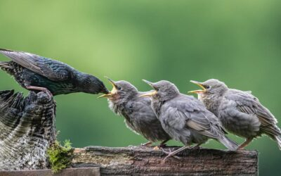 Advanced 3rd – Feeding the Young_Terri Adcock