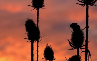 Set Subject 2nd – Silhouettes at Dusk_Michelle Cirkel